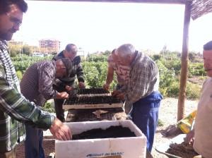 Ayuntamiento de Novelda Huertos-300x224 Se abre el plazo para solicitar parcela en los Huertos Ecológicos
