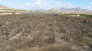 Ayuntamiento de Novelda 20161014_122724-300x168 El Ayuntamiento saca a licitación la antigua finca de experimentación agraria