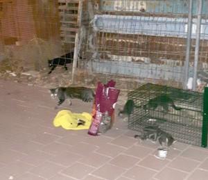 Ayuntamiento de Novelda gato-mini-300x259 Diputación subvenciona el control de colonias urbanas de gatos callejeros