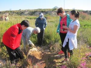 Ayuntamiento de Novelda IMG_5150-300x224 Medio Ambiente finaliza la campaña escolar de reforestación