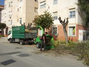 Ayuntamiento de Novelda POda-03-300x225 Finalizan los trabajos de poda del arbolado público