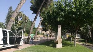 Ayuntamiento de Novelda 01-300x169 El Ayuntamiento realiza un estudio sobre el arbolado de la ciudad