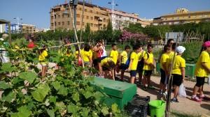 Ayuntamiento de Novelda niños-huertos-2-300x168 Los Huertos Ecológicos Municipales, una actividad para los alumnos de las Escuelas de Verano