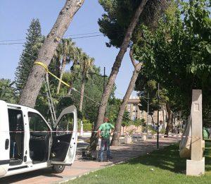 Ayuntamiento de Novelda arbol-mini-300x261 Calidad Urbana tala cuatro pinos en el Paseo de Los Molinos por su peligrosidad
