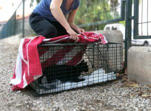 Ayuntamiento de Novelda gatos-2-ok-300x221 El Ayuntamiento recibe una subvención de la Diputación para el control de colonias de gatos